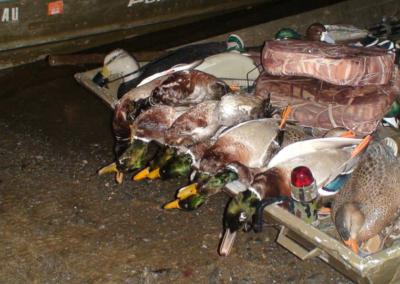 Professional Duck Hunting Guide - Harrisburg, Lancaster, York, Carlisle, Lebanon, Pennsylvania