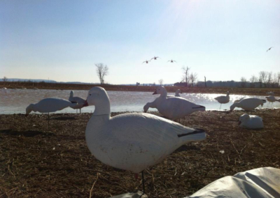 Professional Guided Snow Geese Hunts - Harrisburg, Lancaster, York, Lebanon, Carlisle, Pennsylvania