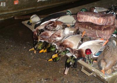 Guided Duck Hunts - Harrisburg, York, Lancaster, Carlisle, Lebanon, Pennsylvania