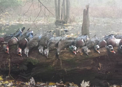 Guided Wood Duck Hunts - Harrisburg, York, Lancaster, Carlisle, Lebanon, Pennsylvania
